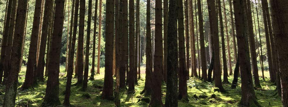 Forstenrieder Park, Foto: muenchen.de / Dominik Zientek