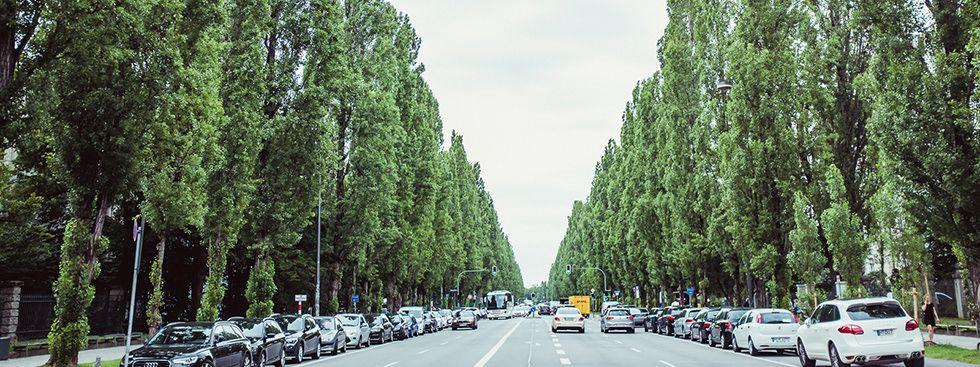 Blick auf die Leopoldstrasse, Foto: Anette Göttlicher