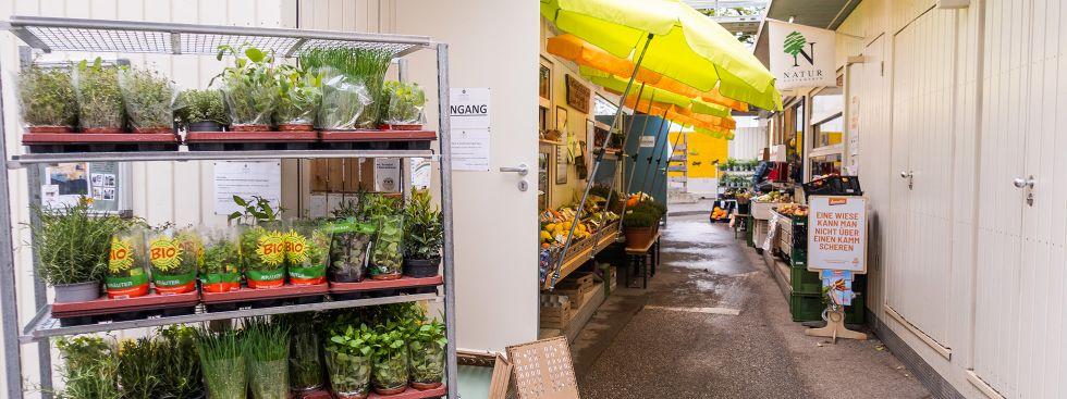 Es wird grün auf dem Markt am Elisabethplatz, Foto: Anette Göttlicher