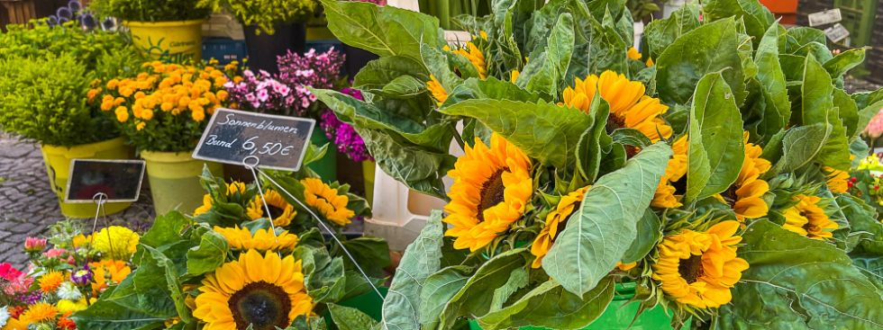 Blumen vom Pasinger Viktualienmarkt, Foto: Anette Göttlicher
