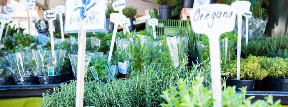 Frische Kräuter vom Viktualienmarkt, Foto: Anette Göttlicher