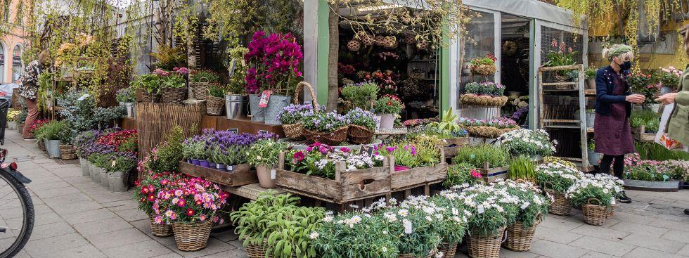 Blumen vom Viktualienmarkt, Foto: Anette Göttlicher