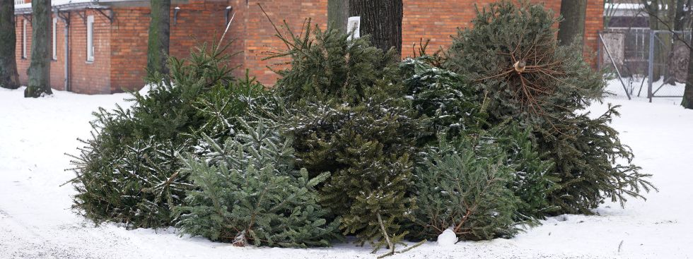 Berlin weihnachtsbaum abholung 2018