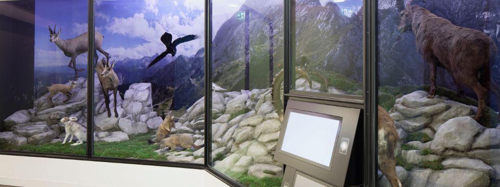 , Foto: Deutsches Jagd- und Fischereimuseum