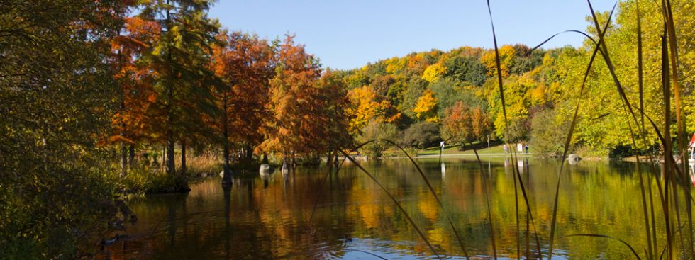 Westpark im Herbst, Foto: Katy Spichal