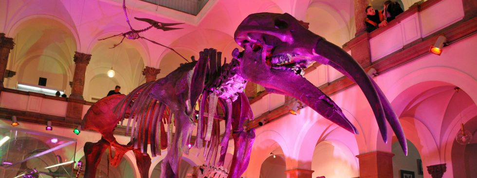 Lange Nacht der Museen: Paläontologisches Museum, Foto: Maren Köhler