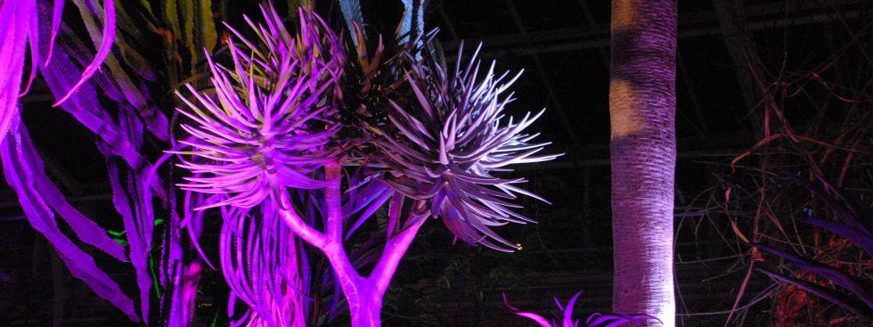 Lange Nacht der Museen - Botanischer Garten , Foto: Botanischer Garten München-Nymphenburg