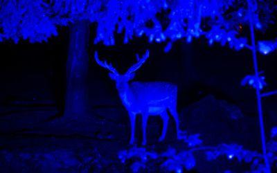 Nacht der Biodervisität im Tierpark Hellabrunn