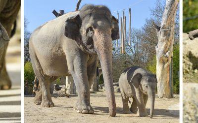 Elefant Otto im Frühling