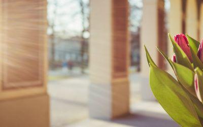 Vorfrühling im Hofgarten