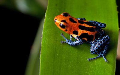 Frosch auf grünem Blatt