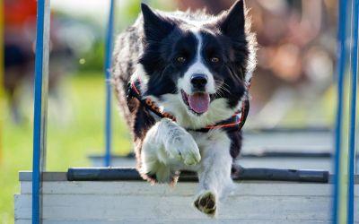Hund beim Hundetraining