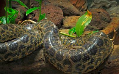 Schlangen Terrarium