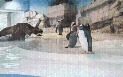 Tierpark Hellabrunn Pinguinwelt
