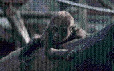 Gorilla-Taufe Tierpark Hellabrunn München