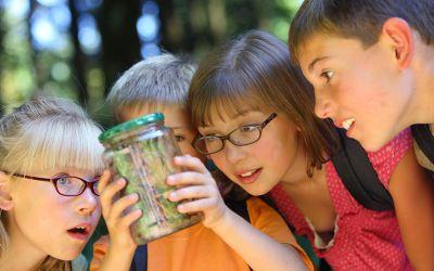 Kinder im Wald schauen in Glas mit Insekt