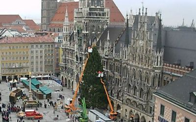 Der Christbaum auf dem Münchner Marienplatz, gespendet von der Gemeinde Bad Kohlgrub.