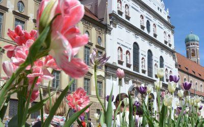 Blumen in der Fußgängerzone