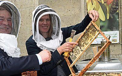 Bienen vor dem Landwirtschaftsministerium an der Ludwigstraße