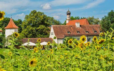 Sonnenblumen am Schloss Blutenburg