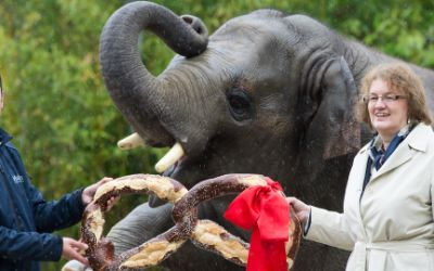 Elefant Ludwig feiert seinen vierten Geburtstag im Tierpark Hellabrunn