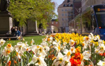 Frühling am Promenadeplatz