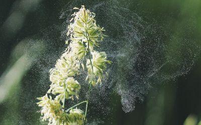 Pflanze mit Pollen