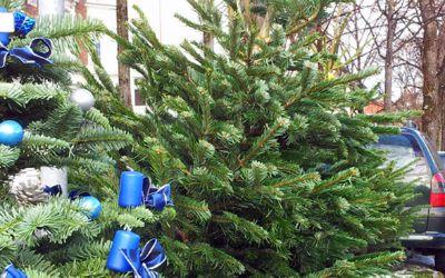 Geschmückter Weihnachtsbaum auf der Straße