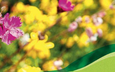 Biene auf einer Blumenwiese