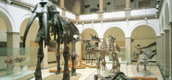 Paläontologisches Museum München