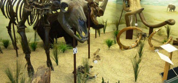 Skelette von Urelefanten im Urzeitmuseum Taufkirchen an der Vils.