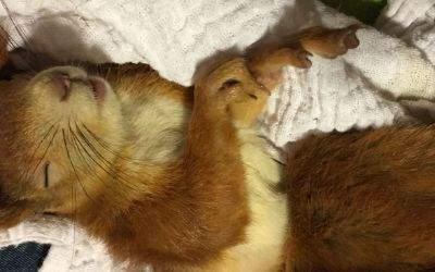 Das Eichhörnchen Eika wurde von Hand wieder aufgepäppelt