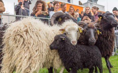 Impressionen vom Schaf-Einzug im Werk3