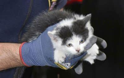 Katze aus Auto befreit