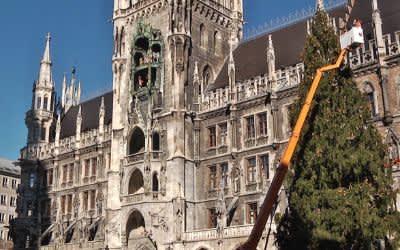 Neuer Christbaum 2018 auf dem Marienplatz