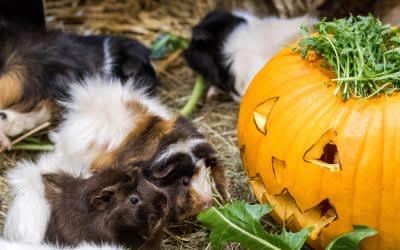 Halloween im Tierpark Hellabrunn