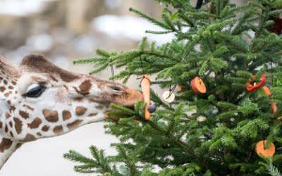Weihnachten in Hellabrunn