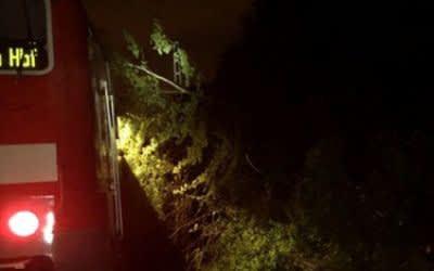 Ein umgestürzter Baum trifft einen Regionalzug