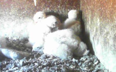 Die Falken-Webcam von muenchen.de