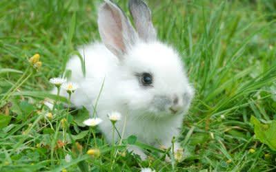Weißer Hase im Gras