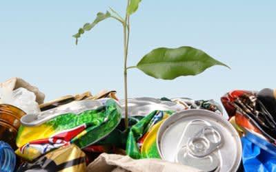 Pflanze wächst aus Müllhalde