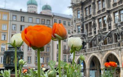 Ranunkeln an der Mariensäule in München