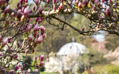 Blütenpracht im Frühling im Botanischen Garten