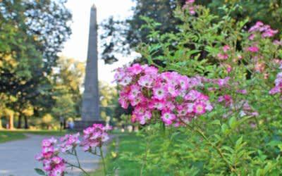 Sommer im Luitpoldpark