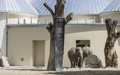 Elefanten testen ihr neues Zuhause
