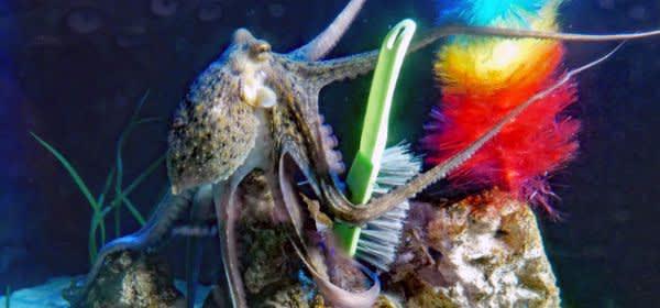 Oktopus im Sea Life
