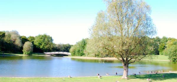 Ostpark München See Enten