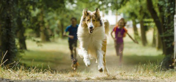 """Szene aus dem Film """"Lassie"""""""