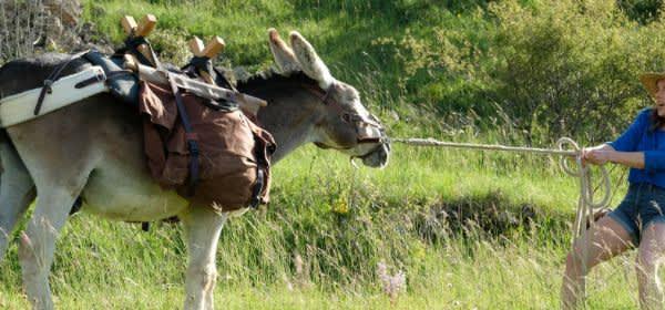 """Szene aus dem Film """"Mein Liebhaber, der Esel & ich"""""""