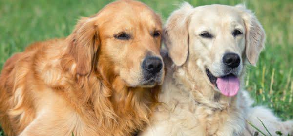 Zwei Hunde liegen im Gras